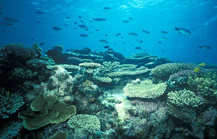 Gulf of Mannar Marine National Park - India Getaways