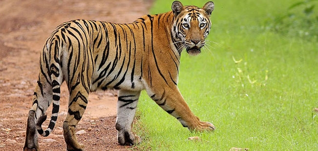 Navegaon National Park Source: www.indianholiday.com